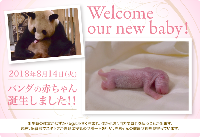 welcome our new baby!