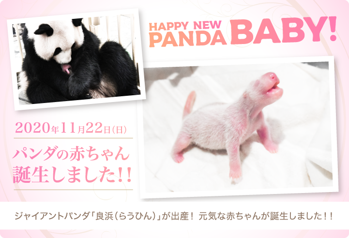 HAPPY NEW PANDA BABY